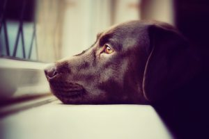 Most dogs spend the majority of their days waiting for their humans to get home from work